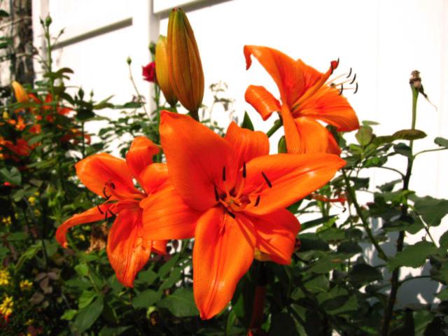 moms orange plant 2006