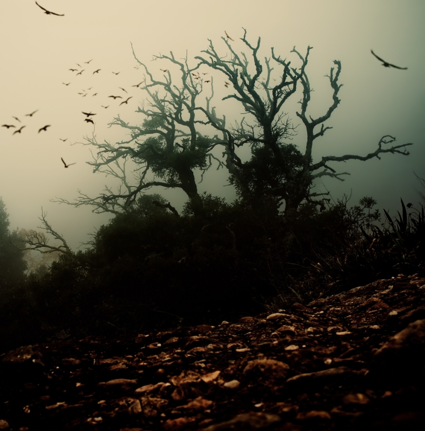 spooky with birds above